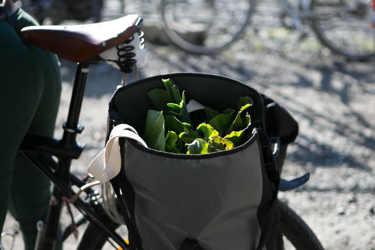 Henting av grønnsaker Oslo Kooperativet