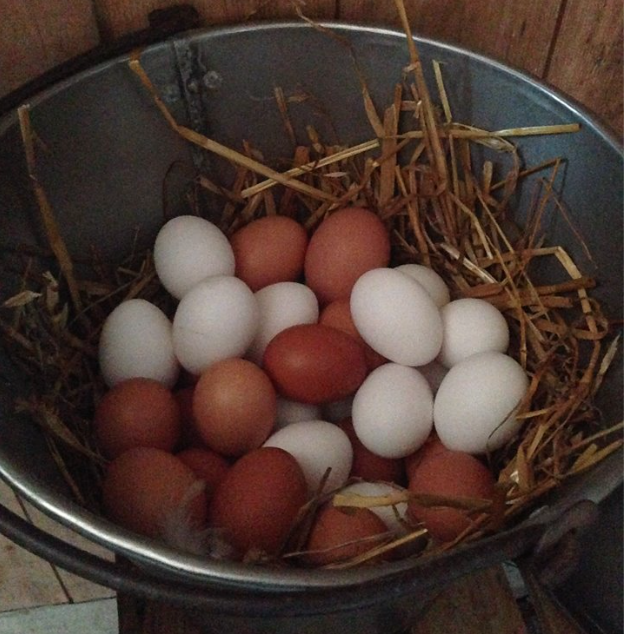 egg fra Bergsmyrene gård